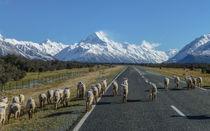 Neuseeland by tapinambur
