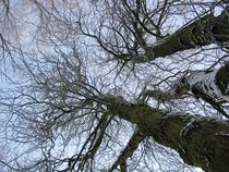 Looking Up- Blick nach Oben by detiart