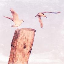 TIME TO FLY von ursfoto