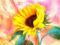 Sonnenblume by darlya