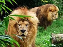 Löwen von Sandra Kaltofen