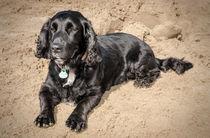 Sand between my paws von Jeremy Sage