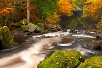 River through autumn colours at the Hermitage, Scotland von Sara Winter