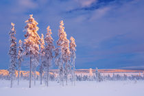 Snowy landscape in Finnish Lapland in winter at sunset by Sara Winter