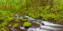 Gorton Creek through lush rainforest, Columbia River Gorge, Oregon, USA by Sara Winter