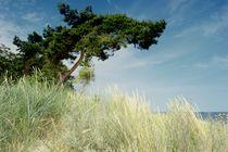 Ostseeküste von moyo