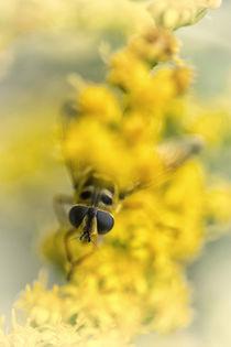 Flowers 4884 von Mario Fichtner