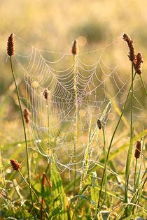 Das Spinnennetz in der Wiese von Bernhard Kaiser