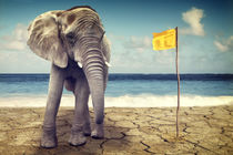 Elefant am Meer  von AD DESIGN Photo + PhotoArt