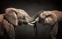 Two Elephants by AD DESIGN Photo + PhotoArt