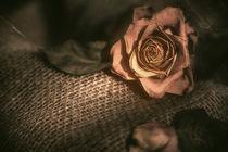 Die Rose von Sandro Mischuda
