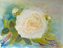 Rose by Irina Usova