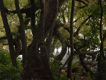 Baum am See-2 von peter norden