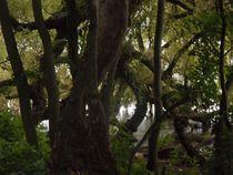 Baum am See-2 by Peter Norden