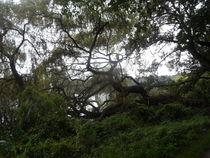 Baum am SEE-4 von Peter Norden