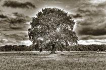der Baum 3 by Jens Hennig