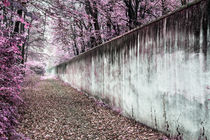 Magenta wall by Mario Fichtner