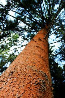 Colourful Tree in the Woods von Philipp Tillmann