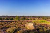Lüneburger Heide von Dennis Stracke