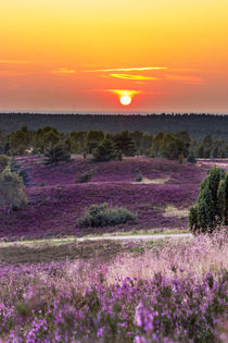 Abends in der Lüneburger Heide by Dennis Stracke