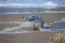 Der frühe Vogel ... by moyo