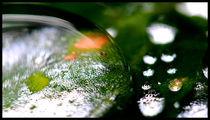 nach dem regen ll von k-h.foerster _______                            port fO= lio