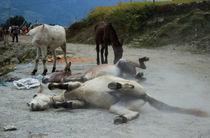 Mules by Bikram Pratap Singh