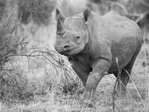 Black rhino in approaching camera in B&W von Yolande  van Niekerk