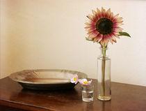 Stillleben mit Sonnenblume by Franziska Rullert