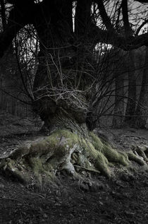 Roots by Perry  van Munster