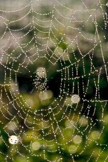Das Spinnennetz von Bernhard Kaiser