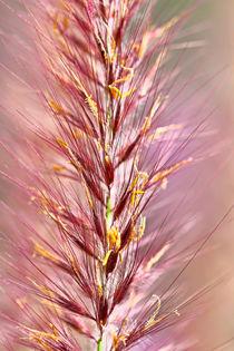 Gras und Blüten by Bernhard Kaiser