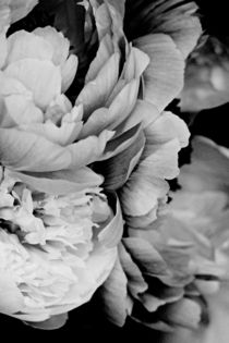 Blueten by chrisphoto