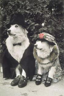 Wedding couple dogs von arthousedesign