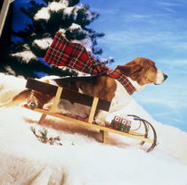 Wintersports dog, WintersportHund by arthousedesign