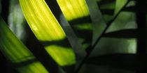 Tropischer Regenwald von Klaus  Kopka