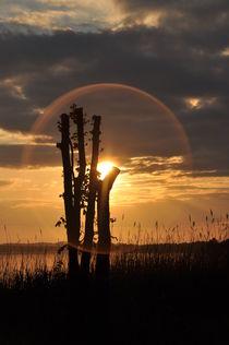 Sonne im Mittelpunkt des Kreises by alana