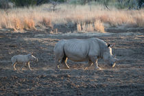 Mother and baby White rhino by Yolande  van Niekerk