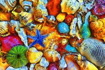 Muscheln, abstrakt by darlya