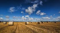 Erntezeit von nordfriesland-und-meer-fotografie