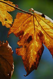 Herbstboten... 3 von loewenherz-artwork
