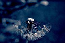 Pusteblume-2015-009-blue