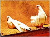 White Doves  von Sandra  Vollmann