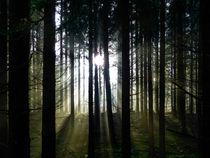 Lichtstimmung im Wald by brava64