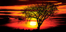 african sunset  von Jake Playmo