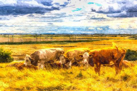 Water-cows-2