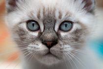 Blaue Augen von Christiane Calmbacher
