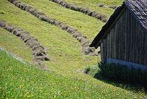 Heuernte in Tirol... von loewenherz-artwork