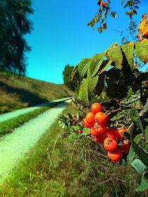 Beeren am Wanderweg von Patrick Jobst