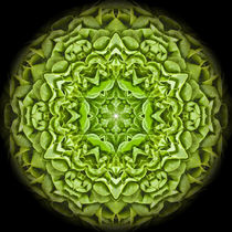 Mandala vegan von Thomas  Bode